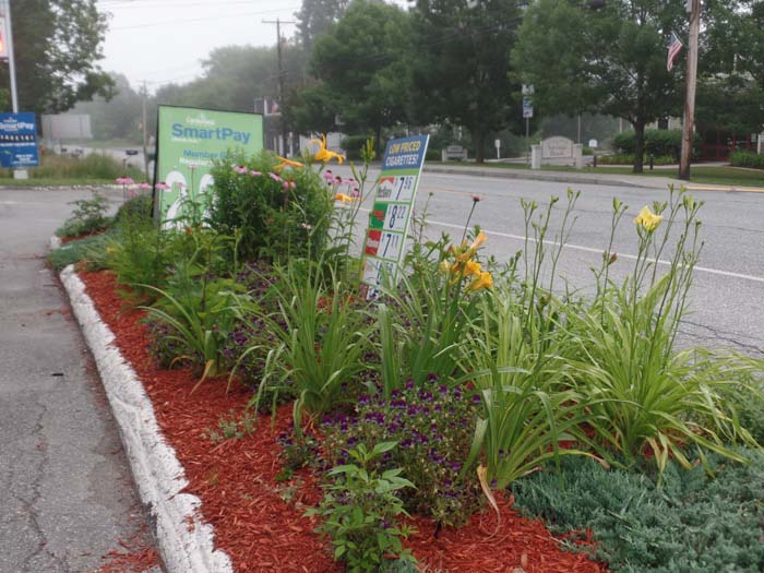 Daylilies and Echinacea